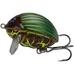 Lil' Bug 3cm, 4,3g Floating, BG3F, WSP GBG